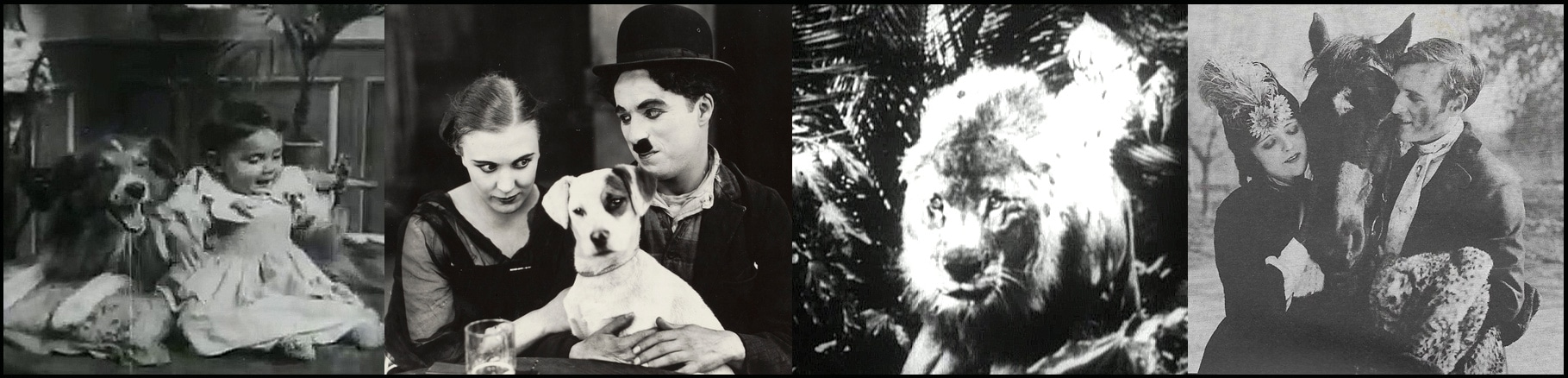 Tierspielfilm History
